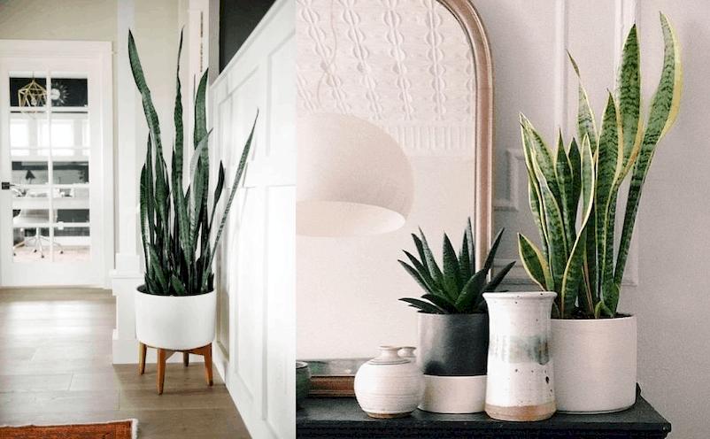 naminiai augalai