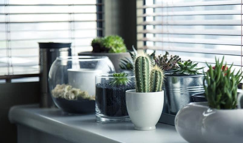 Kokius vazonus rinktis kambariniams augalams?